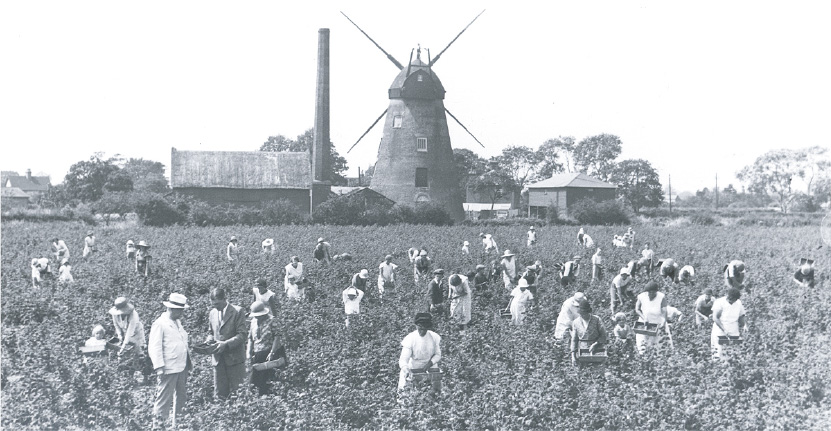 Windmill fruit picking
